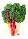 Swiss chard Rainbow Royalty Free Stock Photo