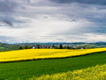 Swiss village surrounded by yellow fields Royalty Free Stock Photo