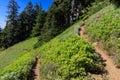 Switchback Trail