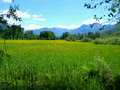 Switss Alps and meadows Royalty Free Stock Photo