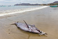 Swordfish on beach, Ecuador Royalty Free Stock Photo