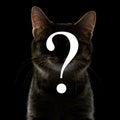 Otázka silueta z kočka černý