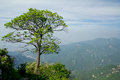 The symbolic tree of jiawutai jiawutaiis a famous scenic spot in qinling mountains Stock Photo