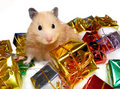 Syrian hamster posing with tons of Christmas gifts Royalty Free Stock Photo