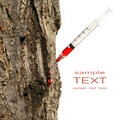 Syringe inserted into tree trunk on white Stock Photography