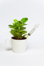 The syringe thrust in dirt in cup with tree a Stock Photos