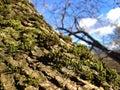 Szczegół drzewo w lesie Zdjęcia Stock
