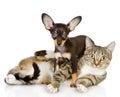 Szczeniak kłama na pasiastym cat looking przy kamerą Obrazy Stock