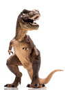 T rex figurine on white background Stock Photography