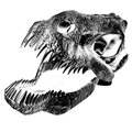 T rex illustration of a skull Royalty Free Stock Photography