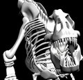 T.rex skeleton Stock Photo