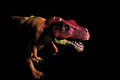 T rex tyrannosaurus dinosaur toy figure against black background Royalty Free Stock Photos