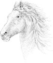 T-shirt horse background.