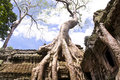 Ta Prohm in Angkor Stock Photography