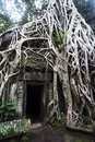 Ta prohm cambodia the exterior wall of framed by the roots of trees Stock Images