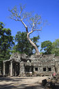 Ta prohm ruins, Angkor Wat Stock Photos