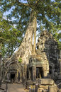 Ta prohm ruins entwined by giant roots of sprung trees on temple at angkor in siem reap province Stock Photography