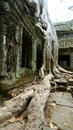 Ta Prohm Temple, Angkor, Cambodia Stock Photos
