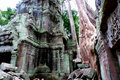 Ta Prohm Temple, Angkor, Cambodia Stock Photography