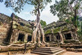 Ta Prohm Temple, Angkor, Cambodia Stock Images