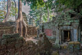 Ta Prohm Temple, Angkor, Cambodia Royalty Free Stock Photos