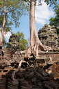 Ta prohm temple angkor cambodia siem reap Stock Photos