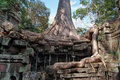 Ta prohm temple angkor cambodia siem reap Royalty Free Stock Photography