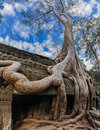 Ta prohm temple at angkor wat cambodia ancient khmer architecture with giant banyan tree complex siem reap three images panorama Stock Photo