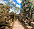 Ta prohm temple at angkor wat cambodia ancient khmer architecture with giant banyan tree complex siem reap two images panorama Stock Images