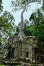 Ta prohm temple in angkor wat complex siem reap cambodia Stock Photos