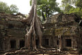 Ta Prohm Temple in AngKor Wat Royalty Free Stock Photo