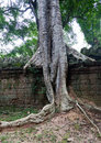 Ta prohm temple in angkor wat stitched panorama of a tree has grown the ancient of cambodia Stock Photos