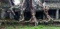 Ta prohm temple in angkor wat stitched panorama of a tree has grown the ancient of cambodia Royalty Free Stock Photos
