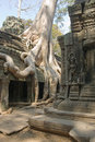 Ta Prohm Temple, Cambodian jungle Royalty Free Stock Photo