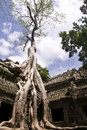 Ta Prohm Tree Stock Photography