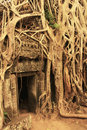 Ta Promh temple, Angkor area, Siem Reap Royalty Free Stock Photos