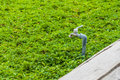 Tab water valve on grass field Royalty Free Stock Images