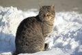 Tabby cat Royalty Free Stock Photo