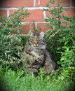 Tabby cat in the grass lonely hiding Stock Photos