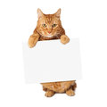 Tabby Cat Holding Blank Sign