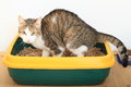 Tabby cat on litter box Royalty Free Stock Photo