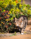 Tabby cat in lush garden setting Images libres de droits