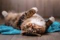 Tabby cat lying Royalty Free Stock Photo