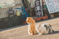 Tabby Cat and Persian Cat on Road during Day