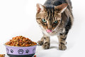 Tabby cat pet with green eyes eating dry food granules from bowl isolated on white background Royalty Free Stock Photo