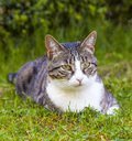 Tabby cat relaxing in the garden Royalty Free Stock Photos