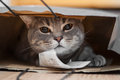 A tabby cat sits inside of a brown paper bag Stock Photo