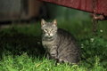 Tabby cat the sitting on the grass under the dray Royalty Free Stock Images