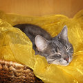 Tabby cat sleeping in basket Royalty Free Stock Photos