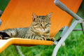 Tabby cat on sunbed cute lying orange and staring in one direction Royalty Free Stock Photography